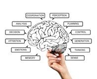 Diagram of brain functions Royalty Free Stock Images