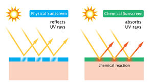 Diagram of chemical sunscreen and physical sunscreen Royalty Free Stock Photography