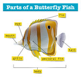 Diagram of different parts of fish. Illustration Royalty Free Stock Photography