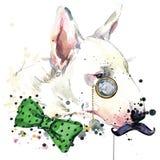 Diagram för Bull terrier hundT-tröja Hundillustration med texturerad bakgrund för färgstänk vattenfärg ovanlig illustrationvatten stock illustrationer