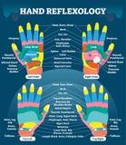 Diagram för illustration för vektor för terapi för handreflexologymassage medicinskt Mänskligt välbefinnandesystem Inre organ- oc vektor illustrationer