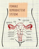 Diagram of the female reproductive system Stock Image