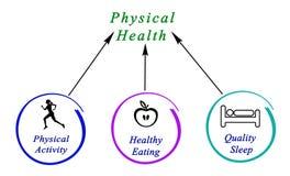 Diagram Fizyczni zdrowie ilustracji