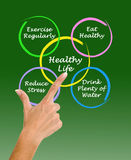 Diagram of healthy life. Presenting diagram of healthy life Stock Images