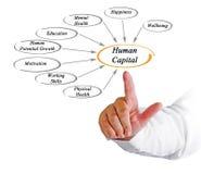 Diagram of Human Capital Stock Photography