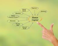 Diagram of Human Capital Royalty Free Stock Photos