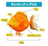 Diagram med delar av fisken royaltyfri illustrationer