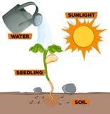 Diagram mostrar la planta que crece del agua y de la luz del sol ilustración del vector