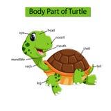 Diagram pokazuje części ciałej żółw royalty ilustracja