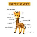 Diagram pokazuje części ciałej żyrafa ilustracji