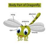 Diagram pokazuje części ciałej dragonfly royalty ilustracja