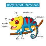 Diagram pokazuje części ciałej kameleon royalty ilustracja