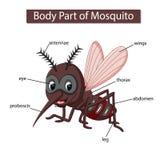 Diagram pokazuje części ciałej komar royalty ilustracja