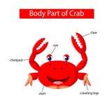 Diagram pokazuje części ciałej krab royalty ilustracja