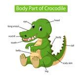 Diagram pokazuje części ciałej krokodyl royalty ilustracja