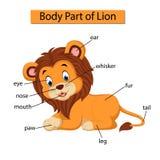 Diagram pokazuje części ciałej lew royalty ilustracja