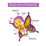 Diagram pokazuje części ciałej motyl royalty ilustracja