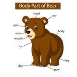 Diagram pokazuje części ciałej niedźwiedź royalty ilustracja