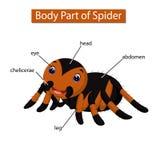 Diagram pokazuje części ciałej pająk ilustracja wektor