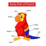 Diagram pokazuje części ciałej papuga ilustracja wektor