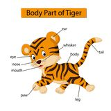 Diagram pokazuje części ciałej tygrys royalty ilustracja