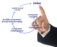 Diagram of sales. From consumer insight to sales royalty free stock photos