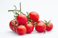 Diagram serie av litet tomatdiagram 05 Fotografering för Bildbyråer