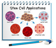 Diagram showing different stem cell applications Royalty Free Stock Photography
