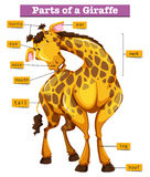 Diagram showing parts of giraffe Stock Image