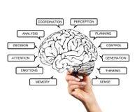 Diagram van hersenenfuncties Royalty-vrije Stock Afbeeldingen
