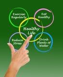 Diagram van het gezonde leven Stock Afbeeldingen