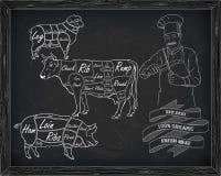 Diagrama, carne de porco, cordeiro e cozinheiro massacrando da carne ilustração do vetor