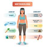 Diagrama da ilustração do vetor do conceito do metabolismo, ciclo bioquímico do corpo ilustração do vetor
