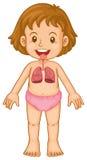 Diagrama da menina e do pulmão ilustração stock