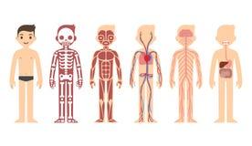 Diagrama de la anatomía Foto de archivo libre de regalías