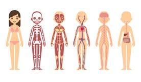 Diagrama de la anatomía Imagen de archivo