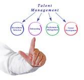 Diagrama de la gestión del talento imagen de archivo