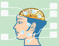 Diagrama de las funciones del cerebro y de la cabeza ilustración del vector