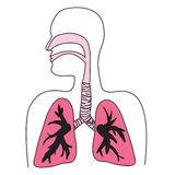 Diagrama de sistema respiratorio humano Imágenes de archivo libres de regalías