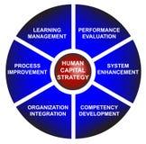 Diagrama del asunto de la estrategia del capital humano Fotos de archivo libres de regalías