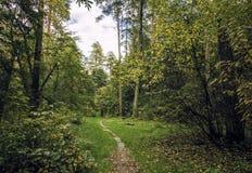 Diagrama del bosque Fotografía de archivo