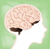 Diagrama del cerebro del niño Imágenes de archivo libres de regalías