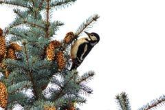 Diagrama del ` s del Año Nuevo de la pulsación de corriente en los árboles de navidad Fotografía de archivo libre de regalías