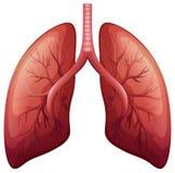 Diagrama do câncer pulmonar em detalhe ilustração do vetor