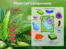 Diagrama dos componentes da pilha da planta ilustração do vetor