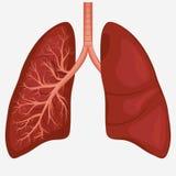 Diagrama humano da anatomia do pulmão ilustração stock