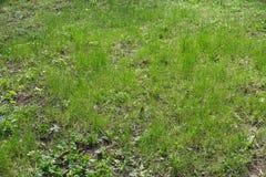 Diagrama inculto natural de la hierba en el parque Imagenes de archivo