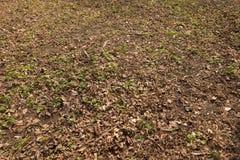 Diagrama inculto natural de la hierba en otoño Fotos de archivo