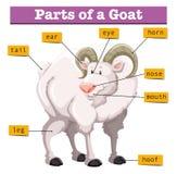 Diagrama que mostra partes da cabra ilustração stock