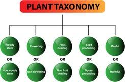 diagrama rośliny taksonomii wektor Fotografia Royalty Free